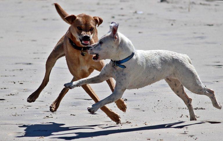 Comment réagir face à un chien dangereux?