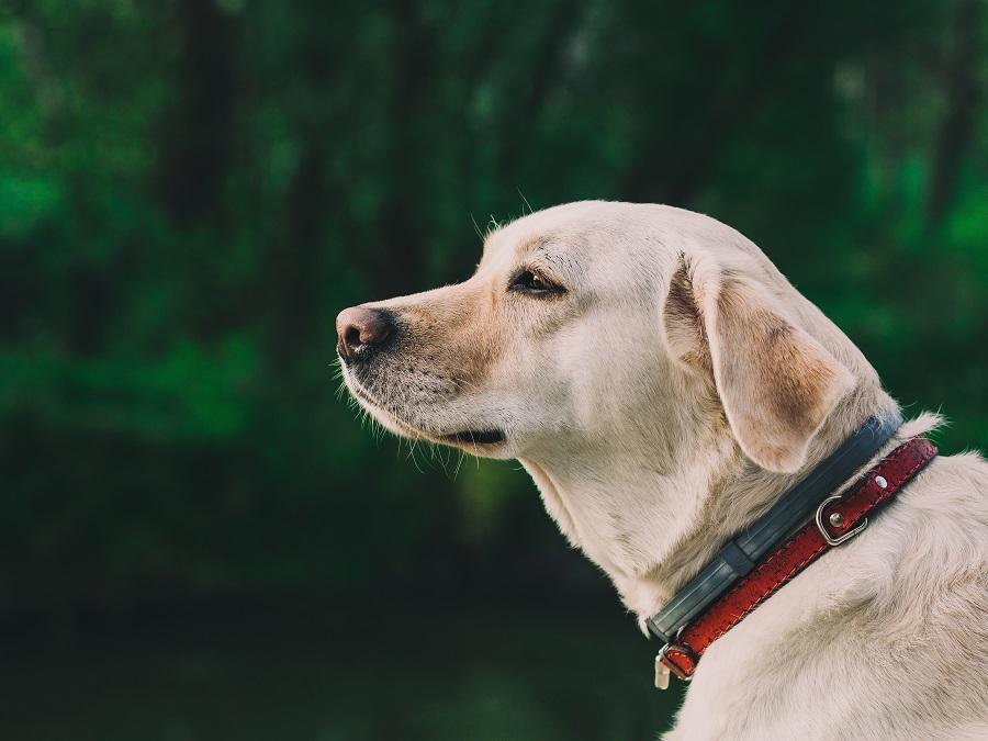 Acheter collier pour chien la liste de tous les colliers for Alimentation maison pour chien