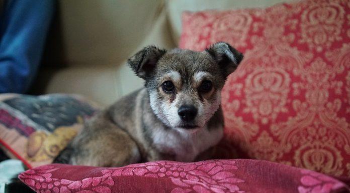 acheter coussin pour chien