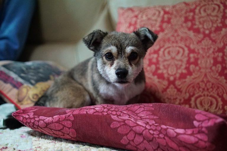 Donnez du confort à votre animal avec un coussin pour chien