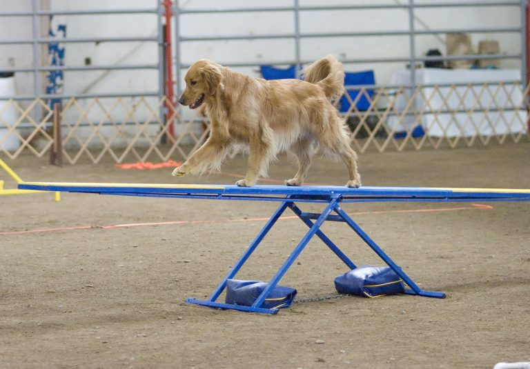 Choisir son éducateur canin : mode d'emploi