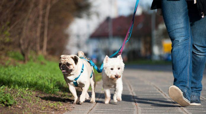acheter harnais pour chien