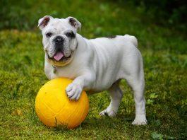 acheter jouet pour chien