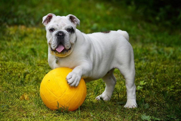 Choisir un bon jouet pour chien pour le rendre heureux