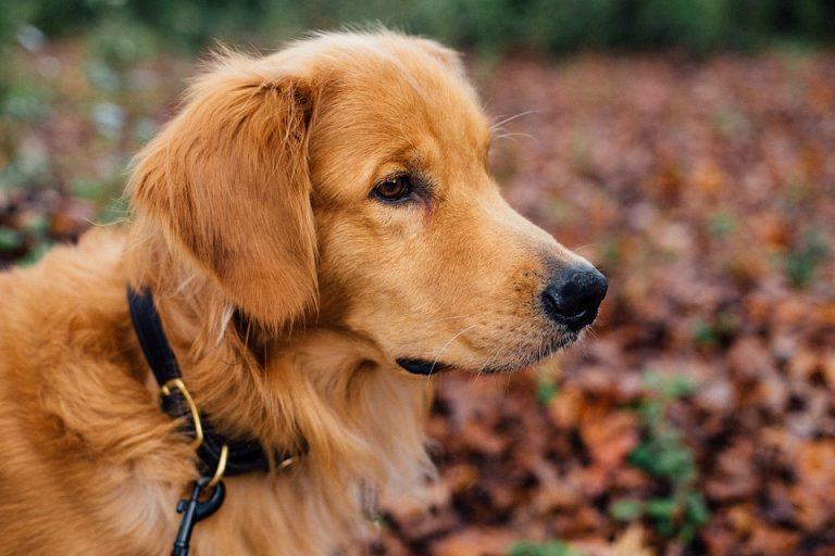 Comment choisir la laisse pour chien idéale?