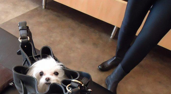 acheter sac pour chien