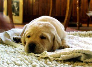 acheter tapis pour chien