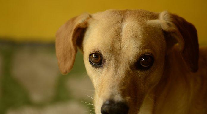 Site de rencontre pour les amoureux des chiens