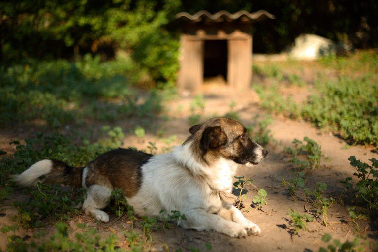 Comment créer un espace adapté à votre chien dans son jardin ?