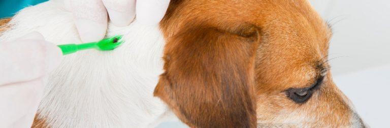 Antiparasitaires : quel produit est le plus adapté à votre chien?