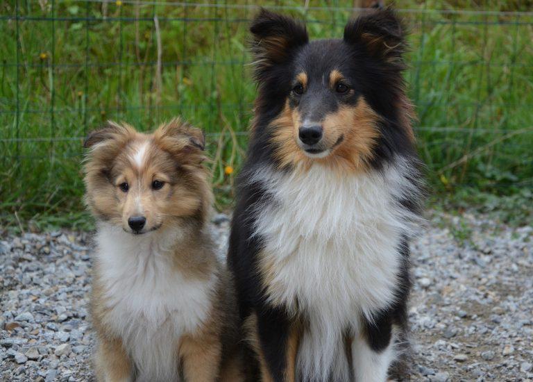 Adopter un chien : mode d'emploi