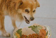 quantité croquettes chien