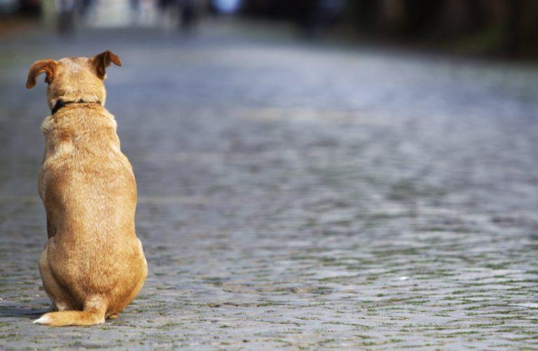 Contre les abandons de chiens, les associations demandent l'aménagement des zones touristiques