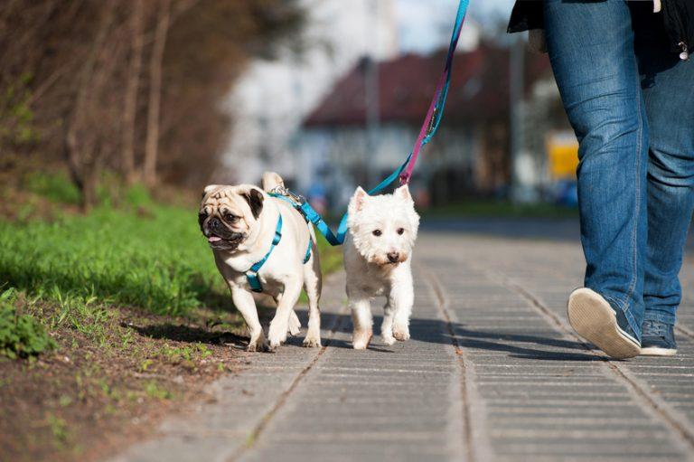 Acheter un harnais pour chien: nos conseils