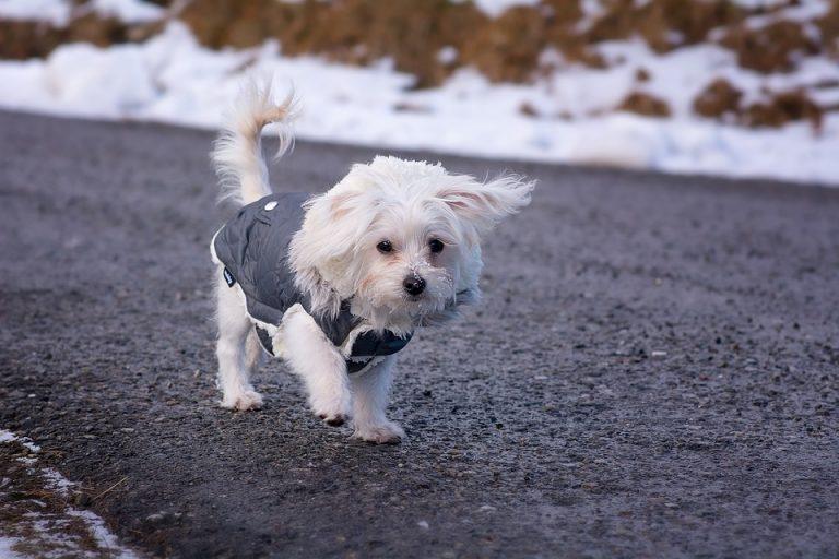 Quel manteau pour chien pour assurer la protection de son animal ?