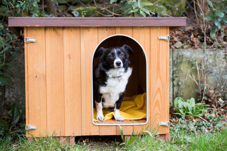 Acheter une niche pour chien pour le confort de son animal