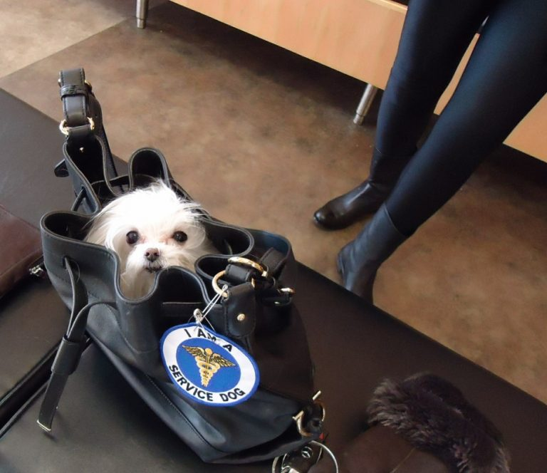 Quel type de sac de transport pour chien choisir ?