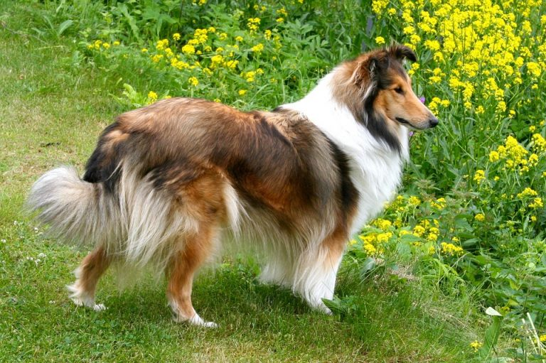 Nos conseils pratiques pour prendre soin de votre chien