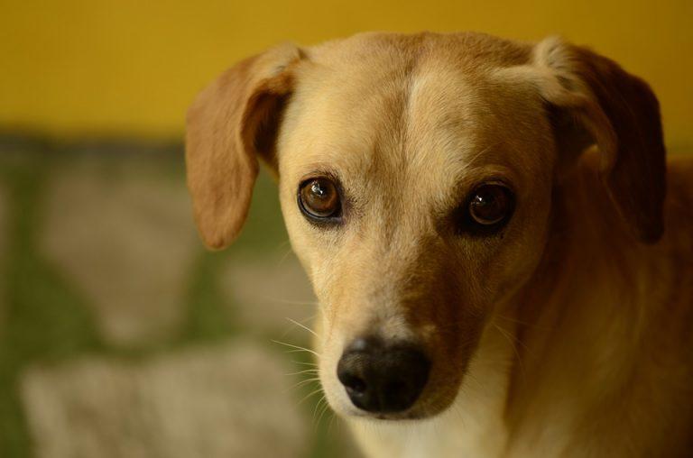Trouver une assurance pour garantir les frais occasionnés par votre chien